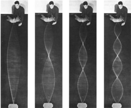 Fundamental and harmonics of standing waves in a rope